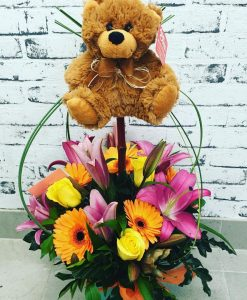 Teddy Arrangement Gladstone
