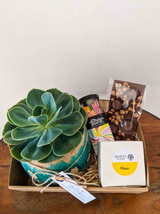 Mini Succulent Hamper 2